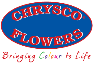 Chrysco Flowers